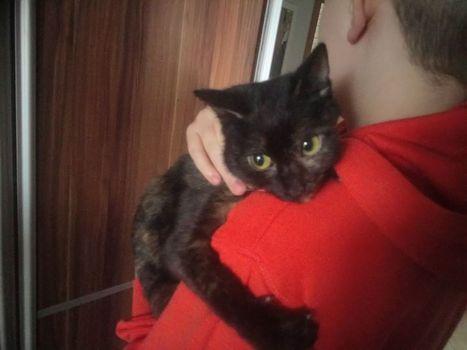 Oglądasz obrazki z tematu: Czarno ruda kotka znaleziona na Kołłątaja