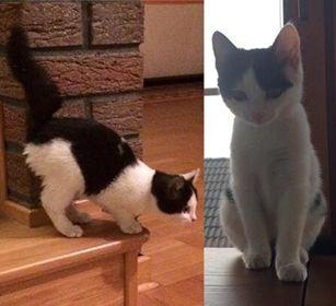 Oglądasz obrazki z tematu: BIało czarny kociak zaginął w Osowiczach