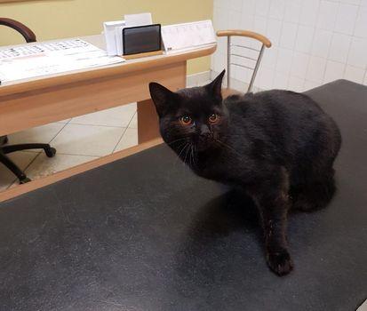Oglądasz obrazki z tematu: Czarny kot znaleziony na ul. Zaściańskiej