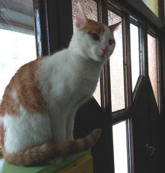 Oglądasz obrazki z tematu: Biało rudy kotek z  Duboisa wrócił do domu :)