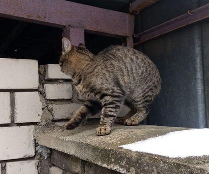 Oglądasz obrazki z tematu: Szaro bury kotek błąka się po Kozłowej
