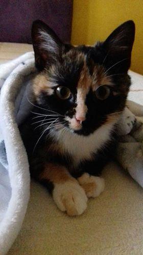 Oglądasz obrazki z tematu: Kotka Paletka vel  Ginger pozdrawia Panią Teresę i Jagodę :)