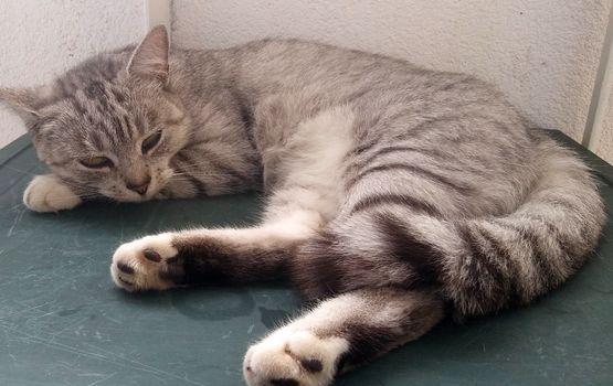 Oglądasz obrazki z tematu: Srebrna kotka z Hallera odnaleziona :)