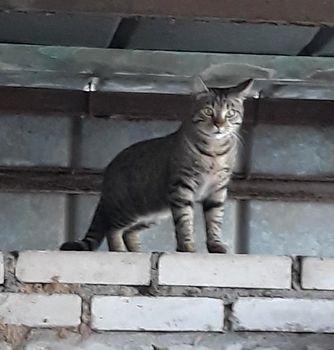 Oglądasz obrazki z tematu: Szary kotek/kotka błąka się po Kozłowej