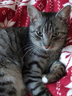 Oglądasz obrazki z tematu: Whiskasowy kot zaginął na Nowym Mieście