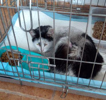 Oglądasz obrazki z tematu: Biało szara kotka znaleziona na Plażowej