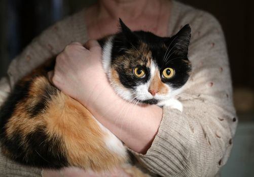 Oglądasz obrazki z tematu: Dramat 5 kotów zacznie się już wkrótce :(
