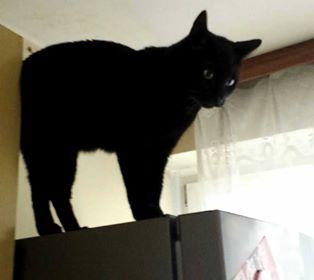 Oglądasz obrazki z tematu: Czarny kotz  Dziesięcin odnaleziony