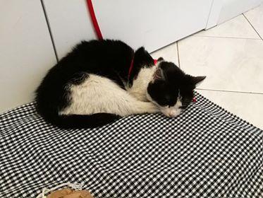 Oglądasz obrazki z tematu: Biało czarna kotka znalezieziona na ul. Zagórnej