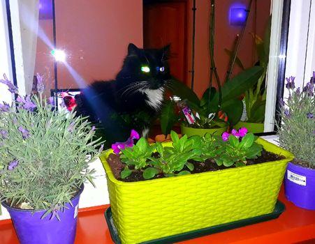 Oglądasz obrazki z tematu: Kotek z Broniewskiego pozdrawiam p. Łukasza