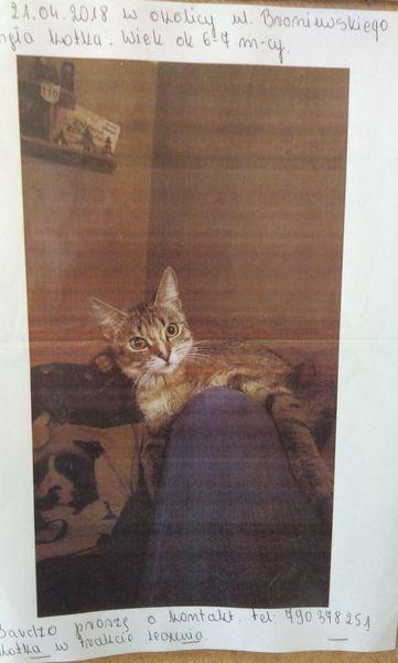 Oglądasz obrazki z tematu: Szara kotka zaginęła na Broniewskiego