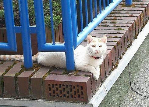Oglądasz obrazki z tematu: Biało rudy kotek błaka się po Grottgera