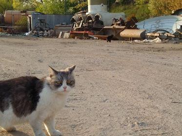 Oglądasz obrazki z tematu: Dwie osDwie  kotki (szara i biało srebrne) błąkają się na  ul. Kombatantów.