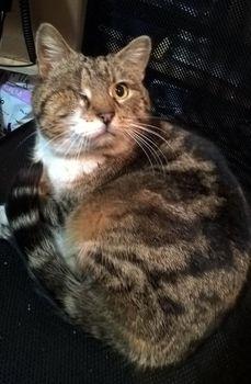 Oglądasz obrazki z tematu: Szara kotka bez oka znaleziona na Mickiewicza