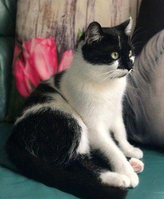 Oglądasz obrazki z tematu: Biało czarna kotka z Zagórnej odnaleziona :)
