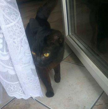 Oglądasz obrazki z tematu: Czarny zadbany kot/kotka przybłąkał się w Grabówce.