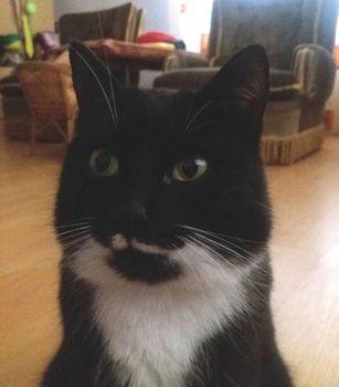Oglądasz obrazki z tematu: Czarno biała kotka zaginęła w Grabówce