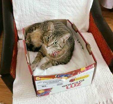 Oglądasz obrazki z tematu: Szara kotka zagineła na Nowym Mieście