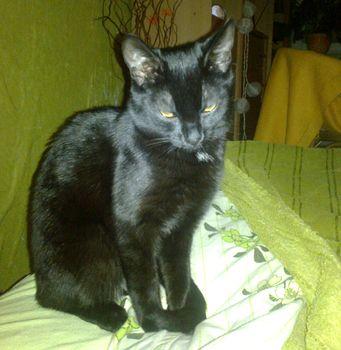 Oglądasz obrazki z tematu: Czarna kotka zaginęła na ul. Pochyłej
