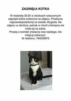 Oglądasz obrazki z tematu: 26 maja na Wygodzie zaginęła czarno biała kotka typu 'pingwin'
