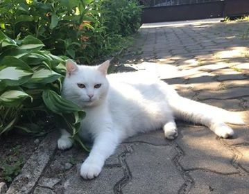 Oglądasz obrazki z tematu: Biała koteczka z os. Dziesięciny odnaleziona