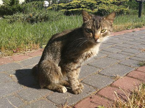 Oglądasz obrazki z tematu: Szara kotka błąka się  w Fastach