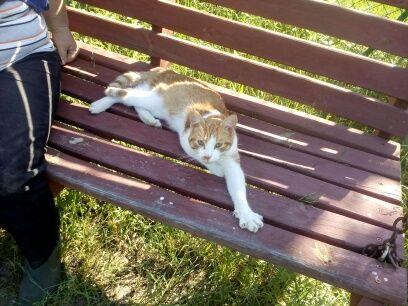 Oglądasz obrazki z tematu: Biało rudy kotek błakał się po koloni Romanowo