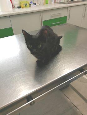 Oglądasz obrazki z tematu: Czarna kotka została znaleziona na Sokólskiej,