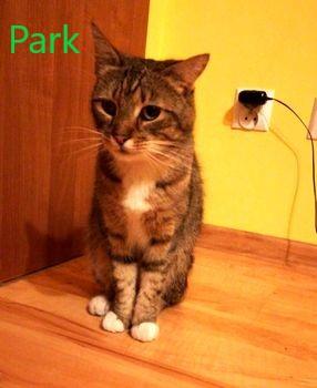 Oglądasz obrazki z tematu: Szaro biała kotka znaleziona w parku Zwierzynieckim