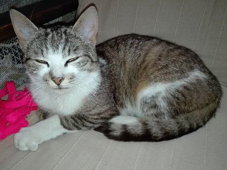 Oglądasz obrazki z tematu:  Szaro biała kotka znaleziona na Boboli