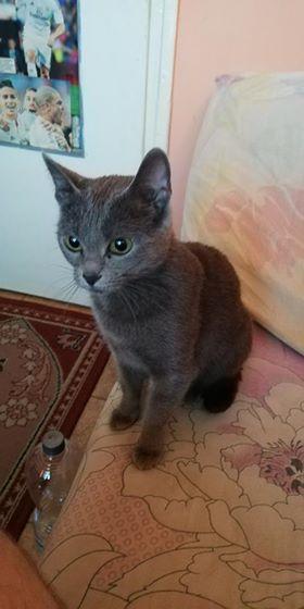 Oglądasz obrazki z tematu: Niebieska kotka znaleziona na Dziesięcinach