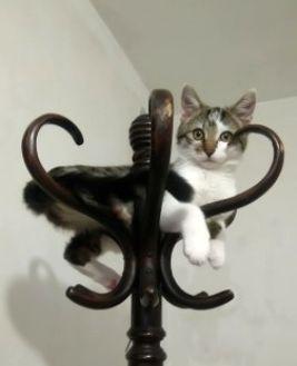 Oglądasz obrazki z tematu: Biało szary kot z ul. Hetmańskiej odnaleziony :)