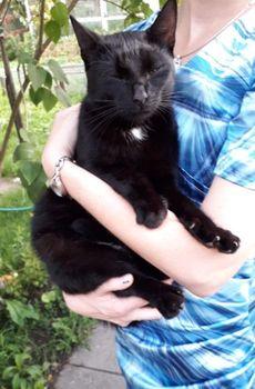 Oglądasz obrazki z tematu: Czarna kotka błaka się po Hetmańskiej
