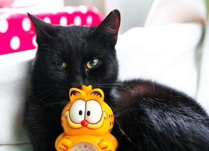 Oglądasz obrazki z tematu: KTo sklei połamane serduszko porzuconego kotka?