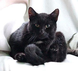 Oglądasz obrazki z tematu: KTo sklei połamane serduszko porzuconego kotka? - serduszko sklejone :)