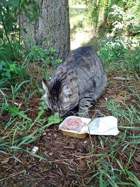 Oglądasz obrazki z tematu: Szara kotka błąkaz  Kleosinia wrócia do domu