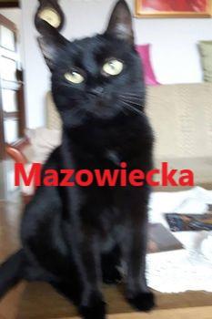 Oglądasz obrazki z tematu: Czarna kotka zaginęła w ok. Mazowieckiej
