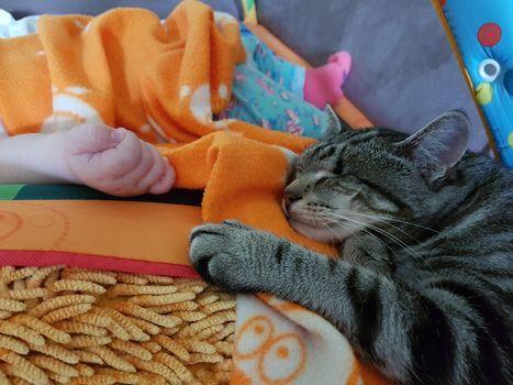 Oglądasz obrazki z tematu: 'Jestem w ciąży muszę oddać kota'
