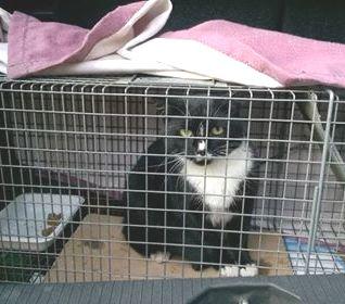 Oglądasz obrazki z tematu: Czarno biały kot/kotka znaleziony na Pułaskiego