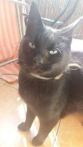 Oglądasz obrazki z tematu: Czarna kotka przybłakała się w  Kleosinie