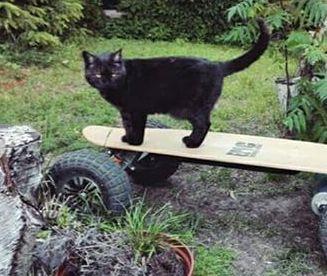 Oglądasz obrazki z tematu: Czarna kotka zaginęła na ul. Zachodniej