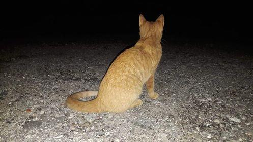 Oglądasz obrazki z tematu: Rudy kotek błąka się po Zwierzynieckiej