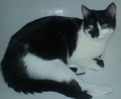 Oglądasz obrazki z tematu: Czarno biała kotka zaginęła na ul. Fabrycznej