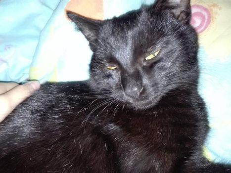 Oglądasz obrazki z tematu: Czarna kotka zaginęła w Dojlidach