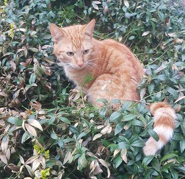 Oglądasz obrazki z tematu: Rudy kot zaginął na os. Nowe Miasto