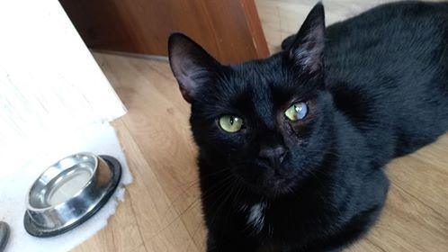 Oglądasz obrazki z tematu: Czarny kot z  Leszczynowej odnaleziony :)