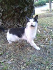 Oglądasz obrazki z tematu: Biało czarny kotek błąka się po Porzeczkowej