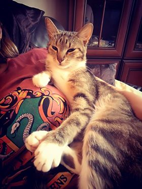 Oglądasz obrazki z tematu: Szaro biała koteczka z ul. Ryskiej/Sienkiewicza odnaleziona