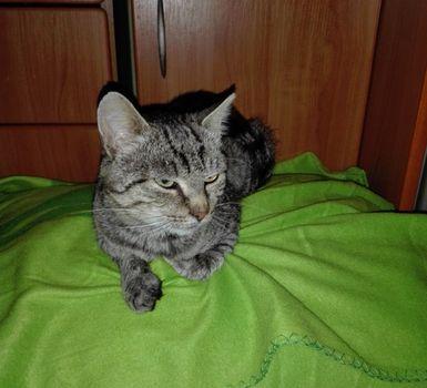 Oglądasz obrazki z tematu: Szary kot znaleziony na Słonecznikowej