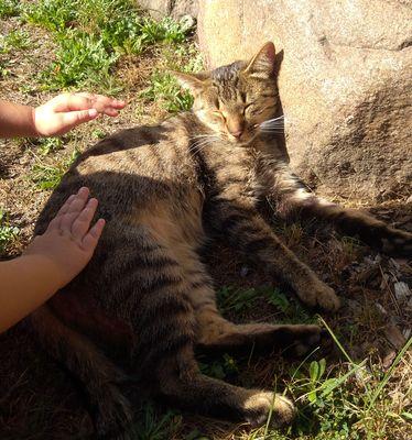 Oglądasz obrazki z tematu: Szara kotka znaleziona w św Wodzie